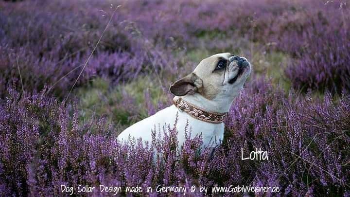 Hundehalsband-Leder-Lotta