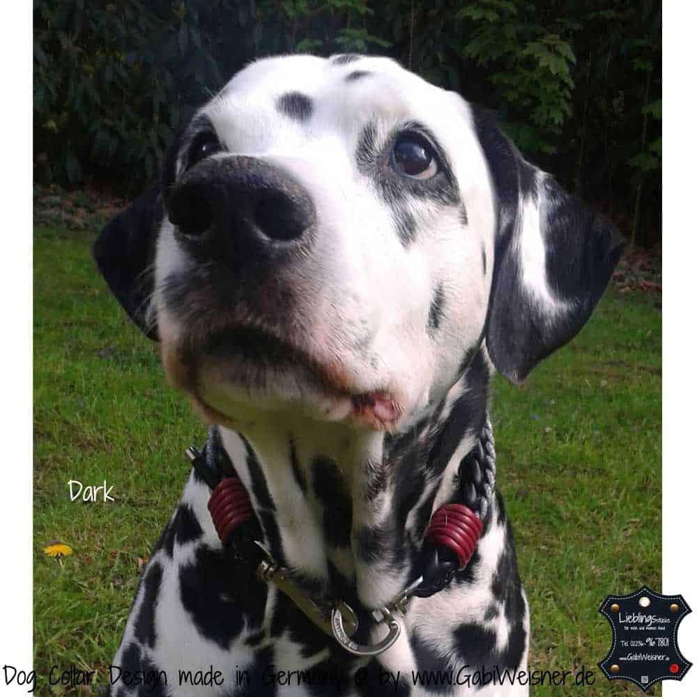 Luxus-Hundehalsband-1