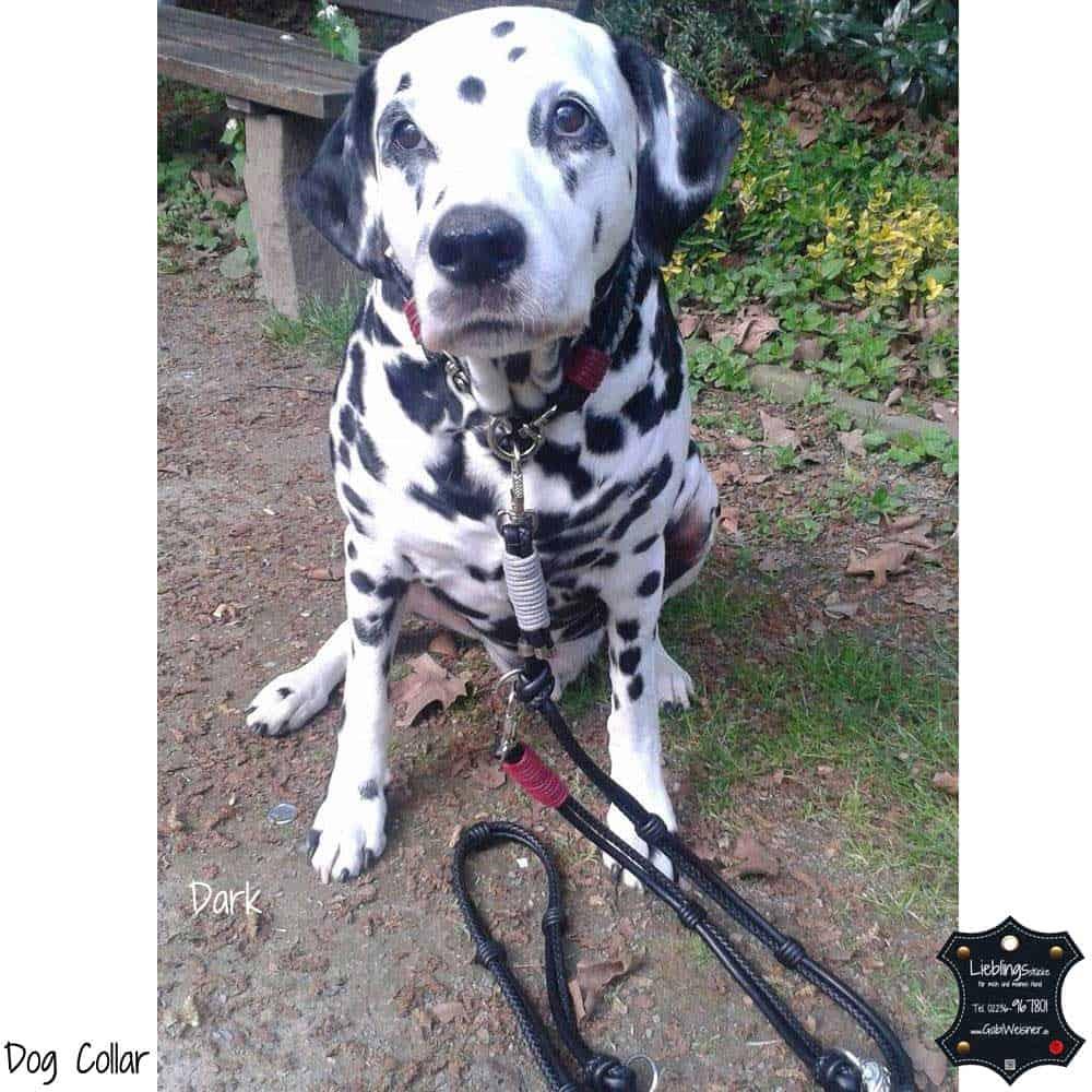 Luxus-Hundehalsband-5