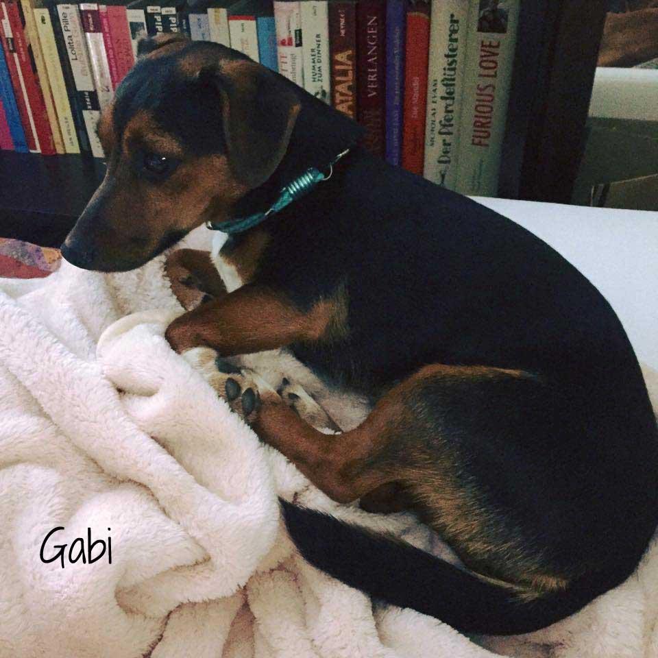 Gabi-2
