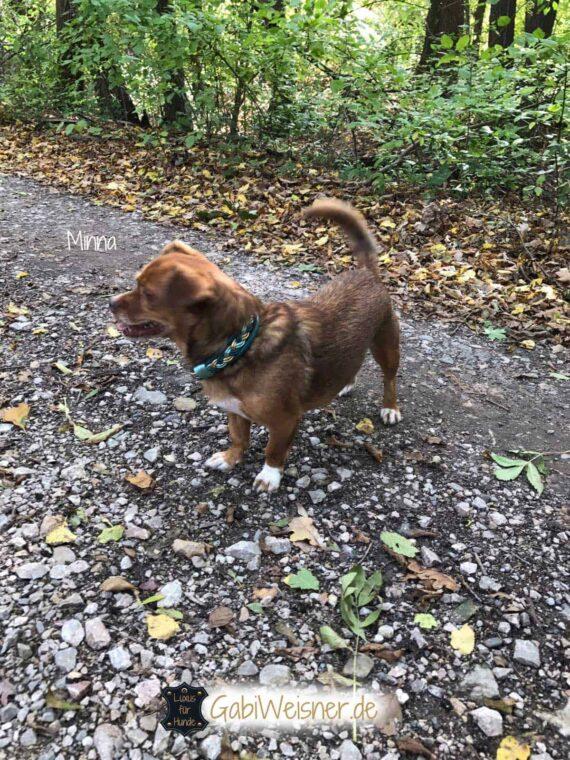 Hundehalsband Leder Mix breit geflochten für kleine Hunde