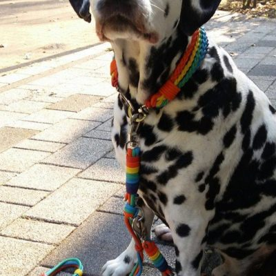 Hundehalsband Regenbogen