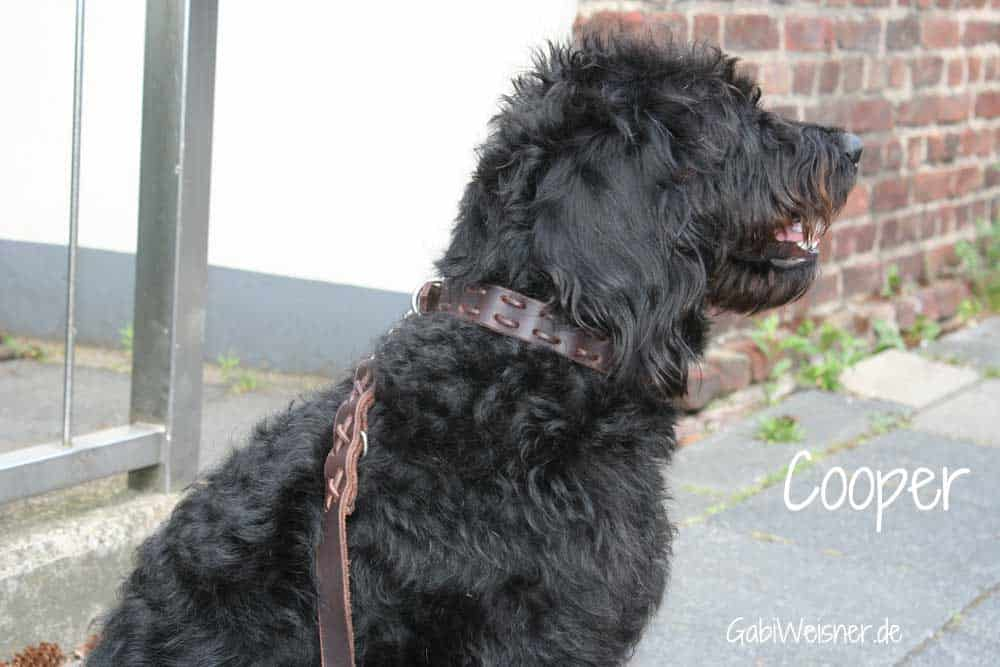 cooper-1