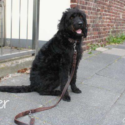 cooper-3