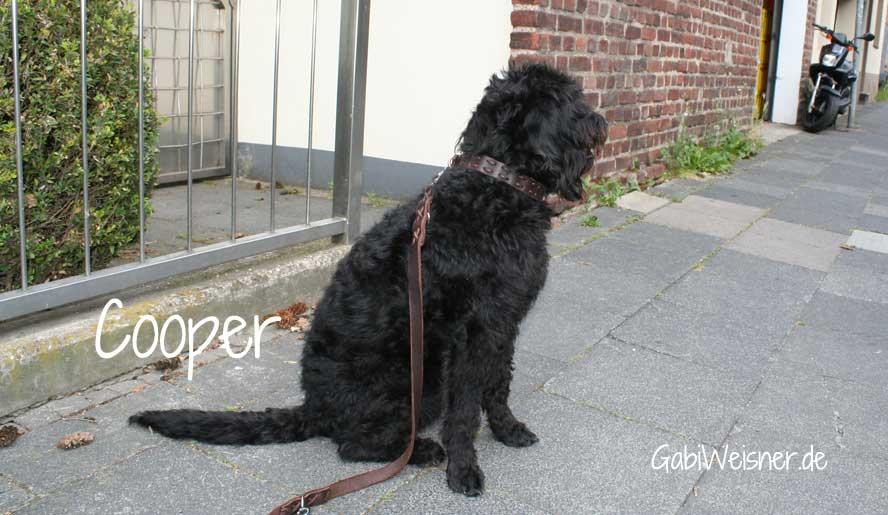 cooper-6