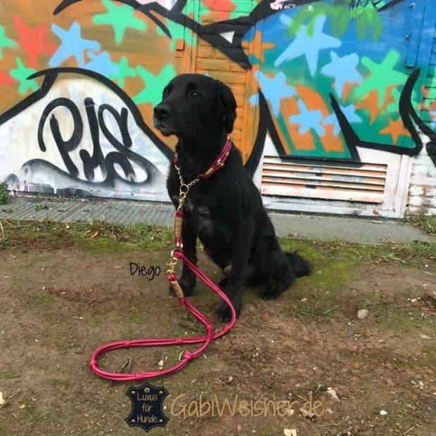 Hundehalsband Leder 4 cm breit Dunkelrot