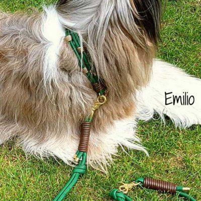 hundehalsband leder grün