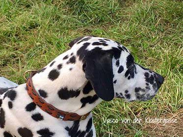 Hundehalsband-Leder nach Wunsch
