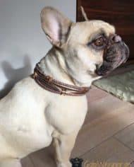 Hundehalsband-Französische-Bulldogge-1