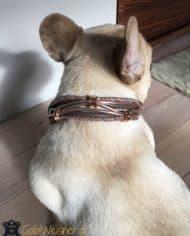 Hundehalsband-Französische-Bulldogge-2