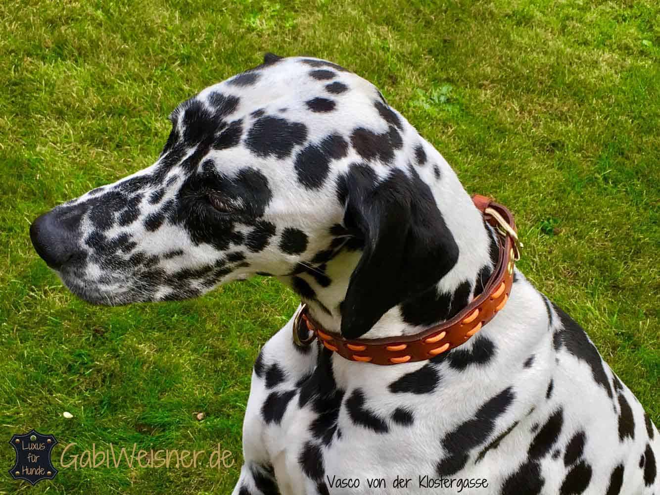 hundehalsband-vasco-orange
