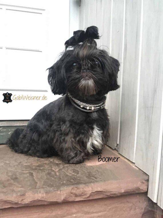 Luxus Hundehalsband mit Strass und Krone