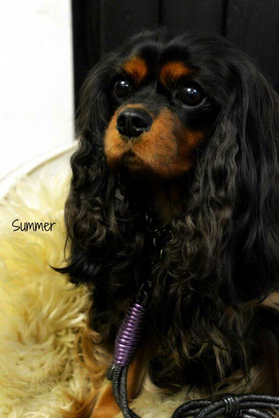 Luxus Hundeleine mit Handschlaufe Silber-Lila