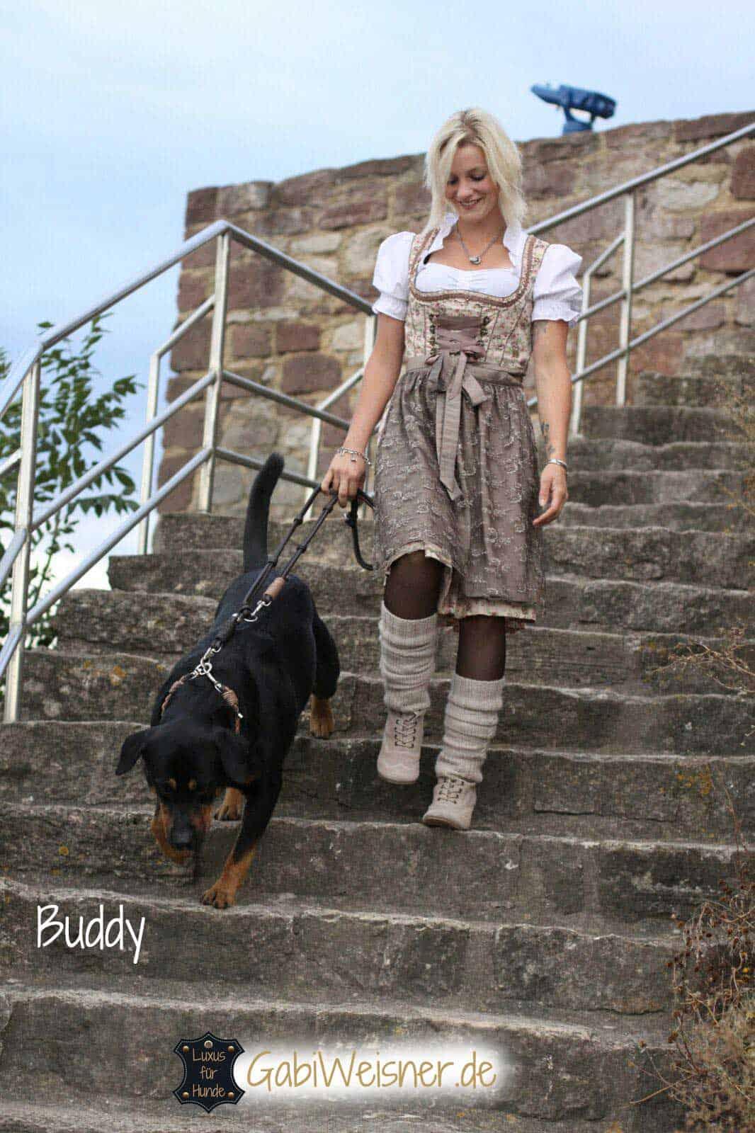 Luxus Hundehalsband Leder exklusive Breite nach Wunsch
