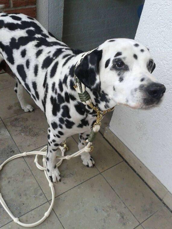Hundehalsband Leder 6 cm breit