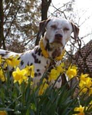 hundehalsband-leder-rund-geflochten-gelb-3