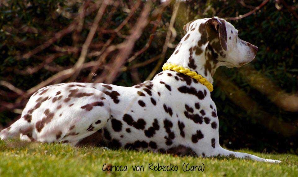 Hundehalsband Leder rund geflochten
