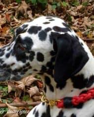 hundehalsband-leder-rund-geflochten-rot-schwarz-vasco-1