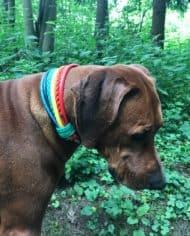 Hundehalsband Regenbogen Simba 5