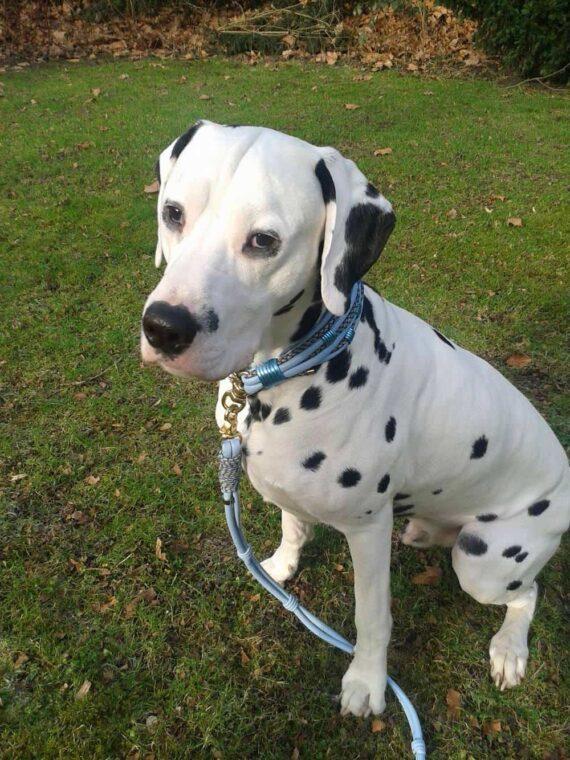 Luxus Hundeleine mit Handschlaufe Leder in Hellblau