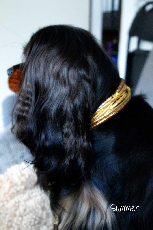 Mini-Halsband Leder, 3 Ohr-Tunnel vergoldet