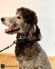 Hundehalsband-Leder-geflochten-Schwarz-Silber-Strass-loki-3