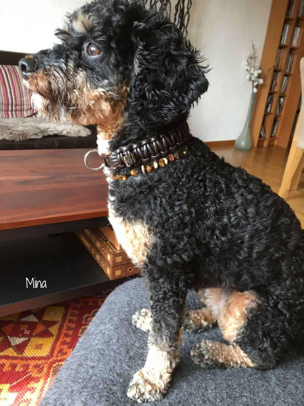 Hundehalsband Leder kleine Hunde