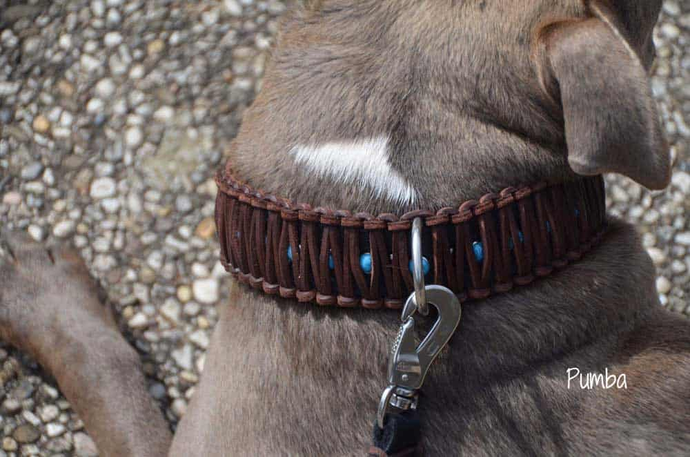 Hundehalsband Leder breit