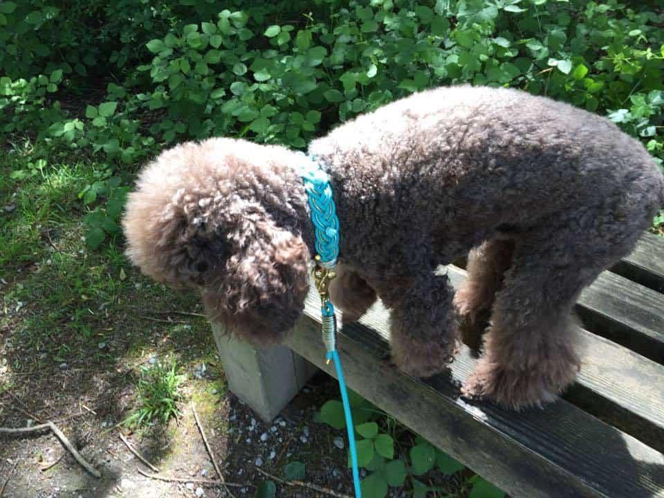 Hundehalsband und Hundeleine im SET