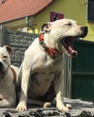 hundehalsband-leder-edelstahl-tuerkis-rudiger-8