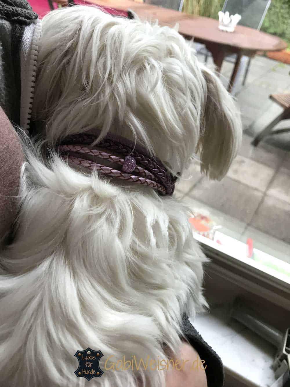 Mini Hundehalsband mit Strass Nappaleder in Lila