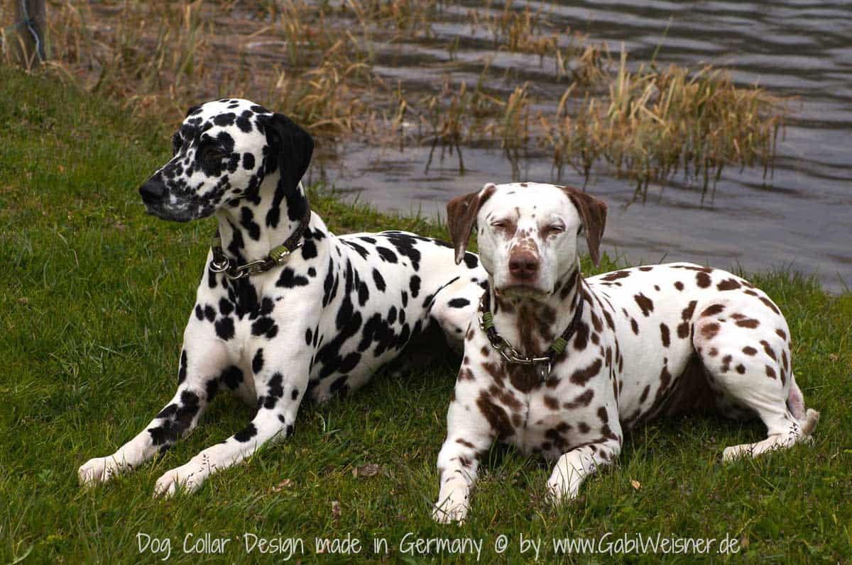 Hundehalsband mit Brummelhaken
