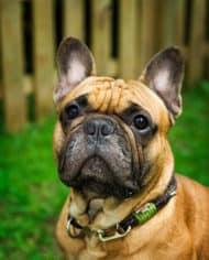 hundehalsband-leder-schroder-2