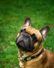 hundehalsband-leder-schroder-5