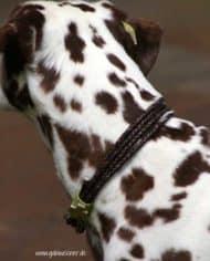 hundehalsband-leder-shop-vasco-3