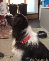 hundehalsband-rund-rot-sky-1