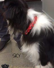 hundehalsband-rund-rot-sky-3