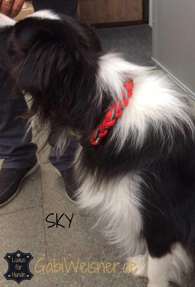 Hundehalsband rund, Leder Mix in Rot, Schwarz und Grau