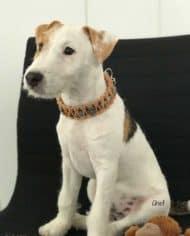 Hundehalsband-mit-Klickverschluss-Chief