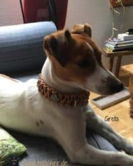 hundehalsband-mit-klickverschluss-fur-kleine-hunde-4