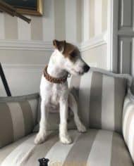 Hundehalsband-mit-Klickverschluss-für-kleine-Hunde-5