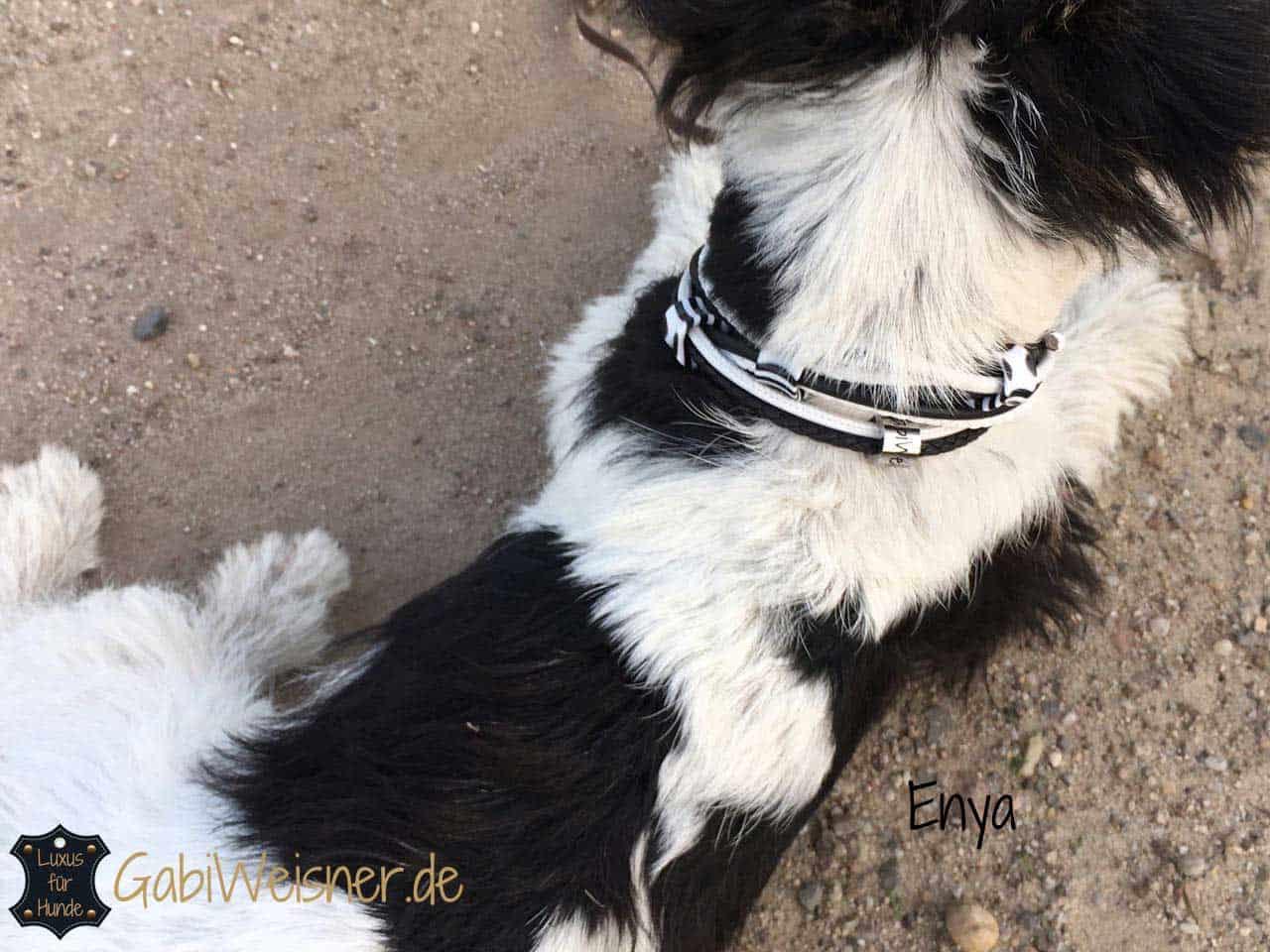 Hundehalsband Leder Mix mit 3 Ohr-Tunnel