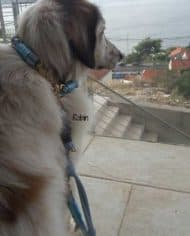 halsband-fur-hunde-mit-langen-haaren-robin_3