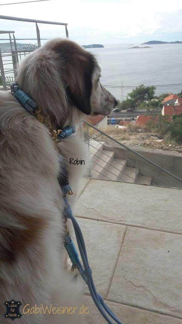 Halsband und Leine für Hunde mit langen Haaren
