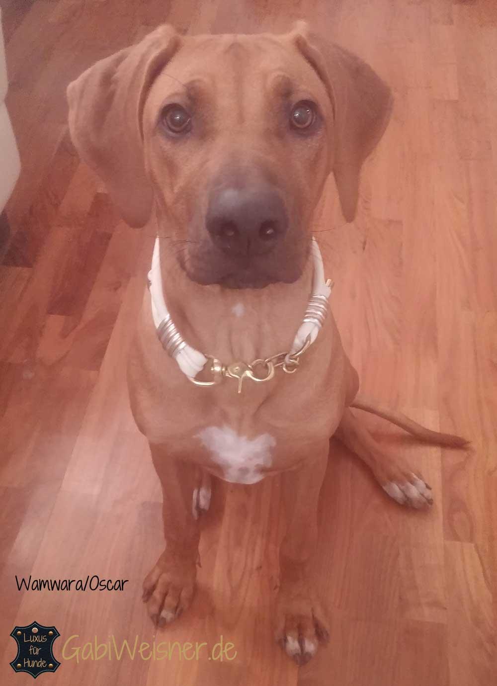 Luxus Hundehalsband mit Strass, Leder 4 cm breit