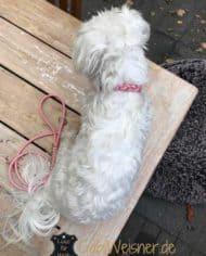 hundehalsband-kleine-hunde-rosa-1