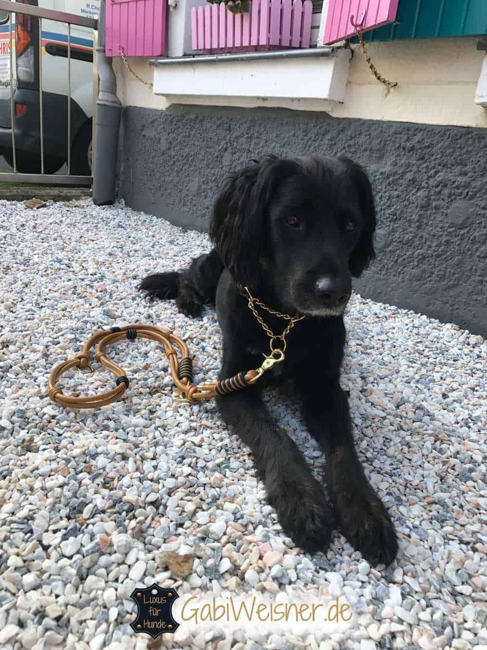 Hundehalsband und Leine im SET