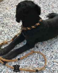hundehalsband-und-leine-im-set-luxus-fur-grosse-hunde_3