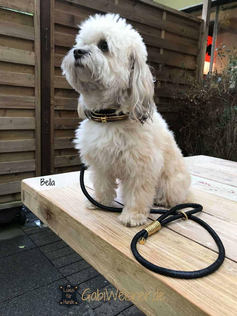 Luxus Hundehalsband exklusiv mit Ohr-Tunnel Leder Blau-Gold