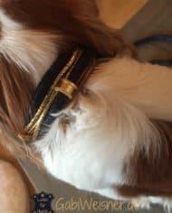 luxus-hundehalsband-exklusiv-mit-ohr-tunnel-leder-blau-gold-henry-2